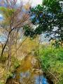 三鷹玉川上水