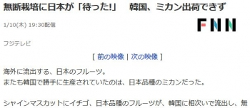 news無断栽培に日本が「待った!」 韓国、ミカン出荷できず