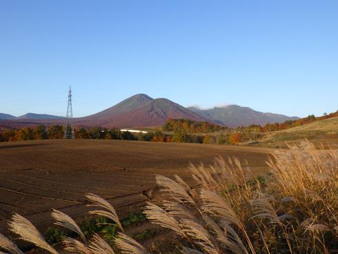 秋の八甲田とススキ-1