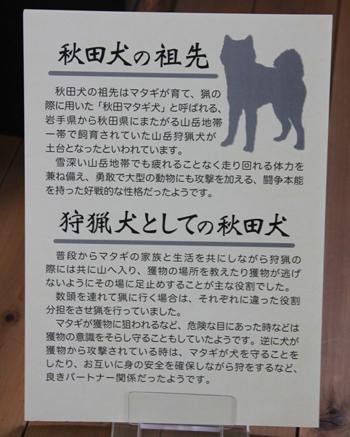 秋田犬会館2019-9