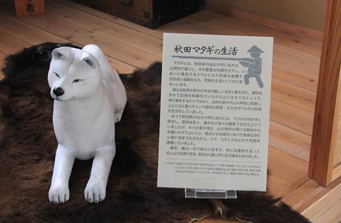 秋田犬会館2019-10