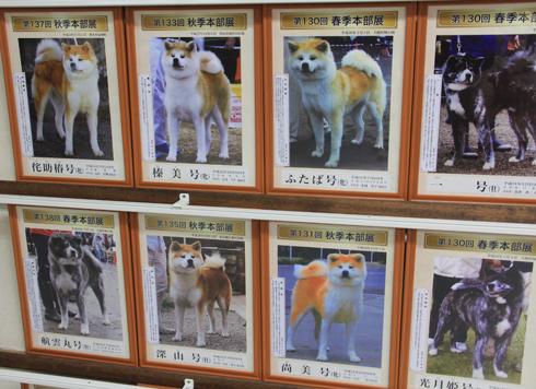 秋田犬会館2019-14