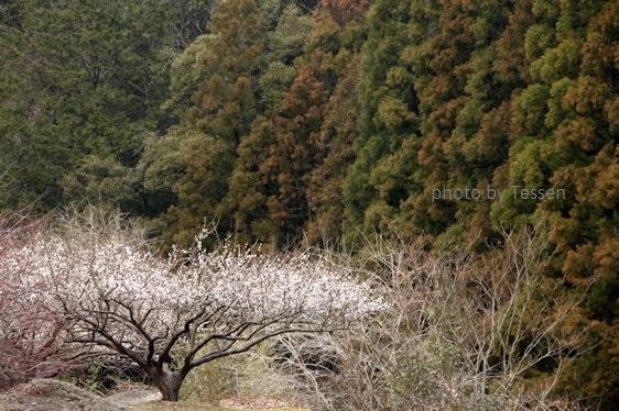 IMG_6517花粉