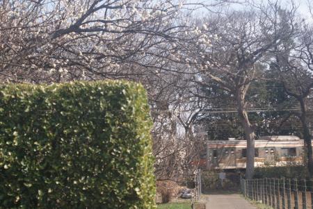 武蔵野線梅林