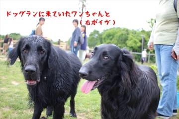 2018_06_03_4411_R.jpg