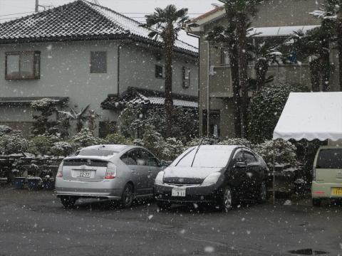平成31年2月11日「今日の雪は積もりそうかな?」_R