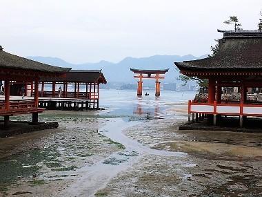 9拝殿と大鳥居1221