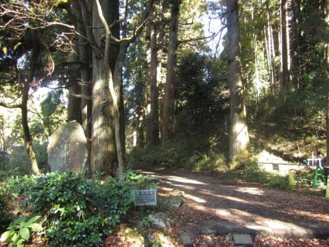 箱根旧街道杉並木入口