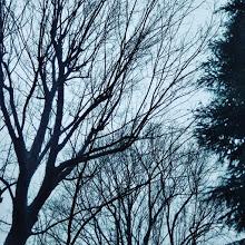 20190216授業参観の日の朝.jpg