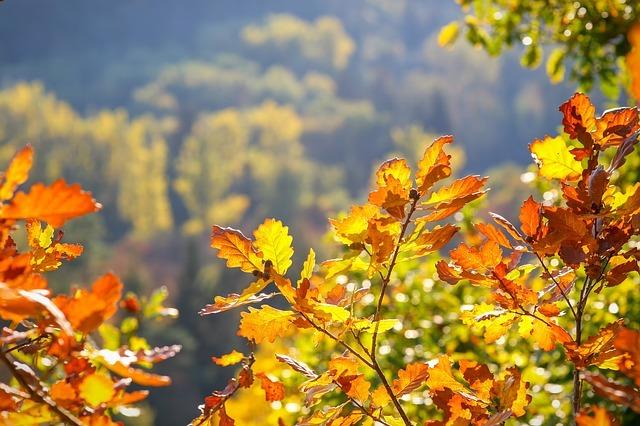 oak-leaves-3747763_640.jpg