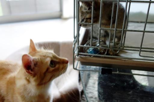 子猫とモコ-b DSC06615
