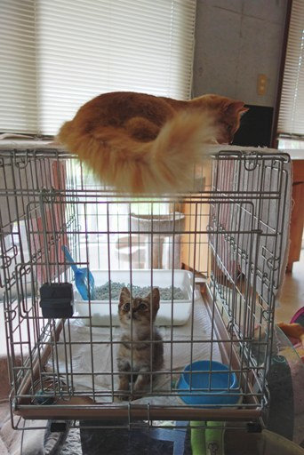 子猫とモコ-c DSC06623