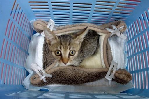 子猫風邪-b DSC06886