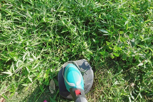 草刈り-c DSC06975