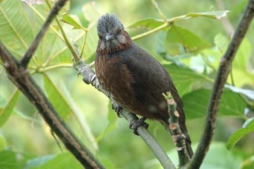 鳥さんa DSC04034