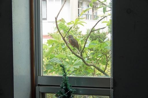 鳥さん-b DSC04021