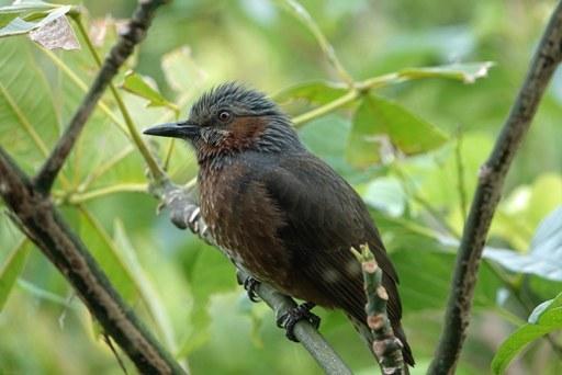 鳥さん-cDSC04037