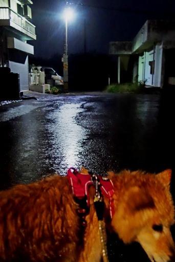 猫の目-b DSC03613