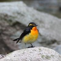 鳥見遊山人
