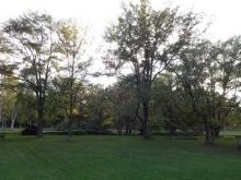 太陽の広場でも倒木の被害があります