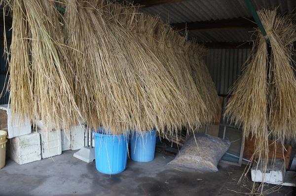 注連縄作り用のわら束…奥のビニール袋に入っているのは、ハカマと呼ぶ、ワラの邪魔な部分を集めたもの。
