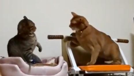 猫パンチあびちゃん♪