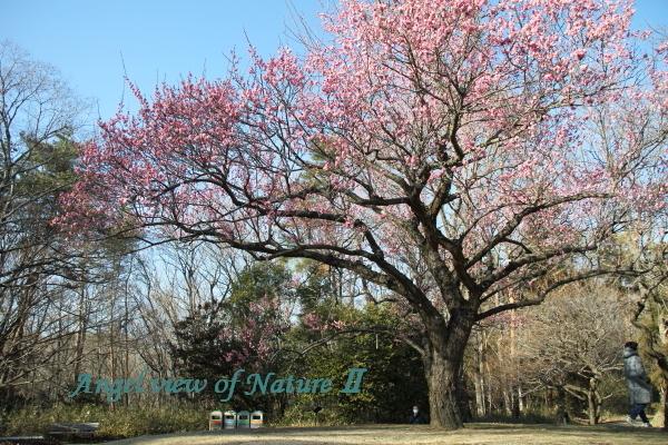 武蔵丘陵森林公園1902179372①