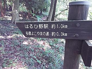 haruhino1-13.jpg