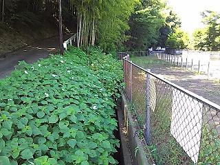 haruhino1-5.jpg