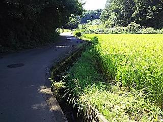haruhino1-9.jpg