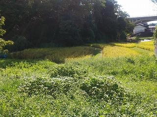 kasayatokouen1-1.jpg