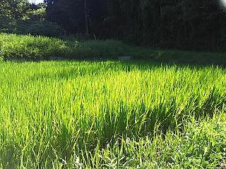 kurokawasuiden3.jpg