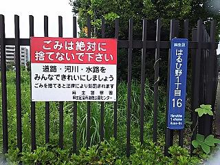 wakabaminami12.jpg