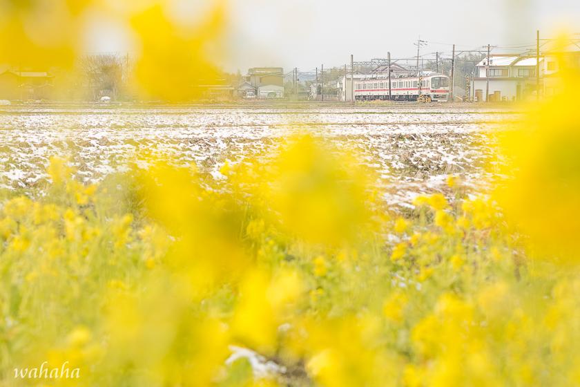 310211sintetsu_hata-3.jpg