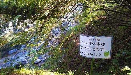 森の和み(秋) 川