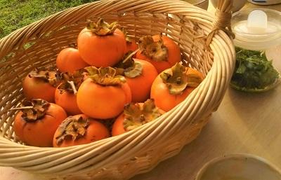 11月 ココロ和み 柿
