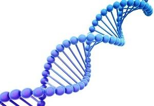 DNA11月 ゆるぶ