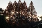 2.樹木-71D 1712q
