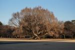 3.樹木-52D 1712qr
