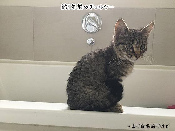 01042019_cat4.jpg