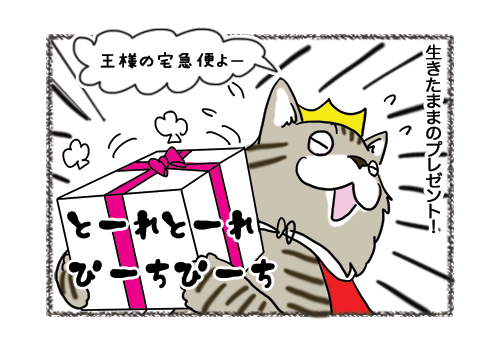 02022019_cat4.jpg