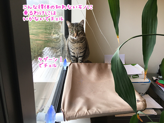 04042019_cat1.jpg