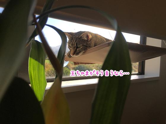 04042019_cat3.jpg