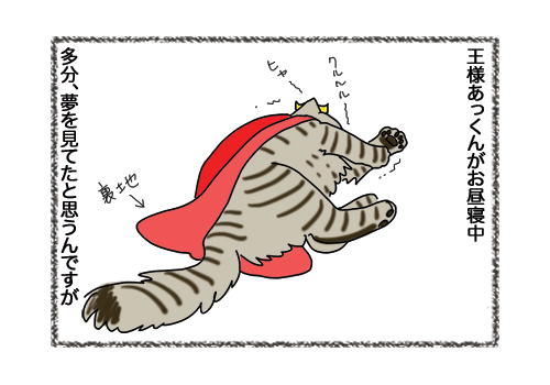 07022019_cat1.jpg