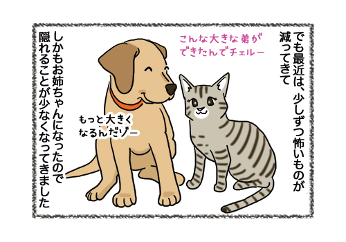 08022019_cat2.jpg