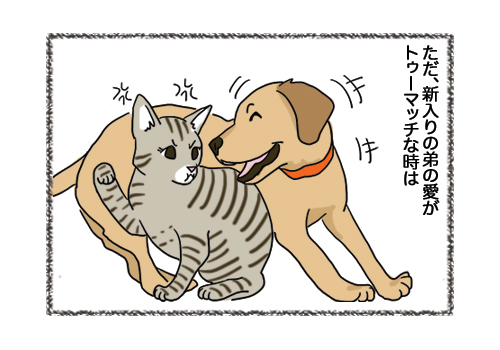 08022019_cat3.jpg