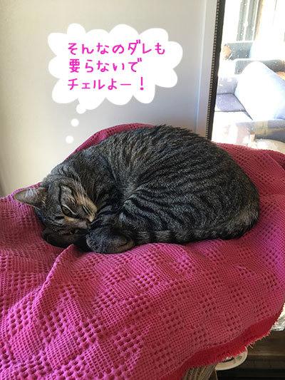 08042019_cat2.jpg