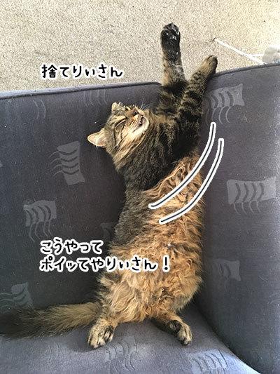 08042019_cat3.jpg