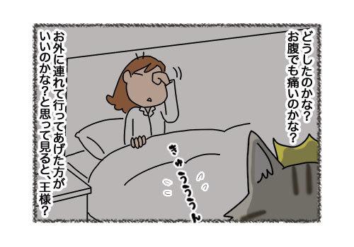 14022019_cat2.jpg