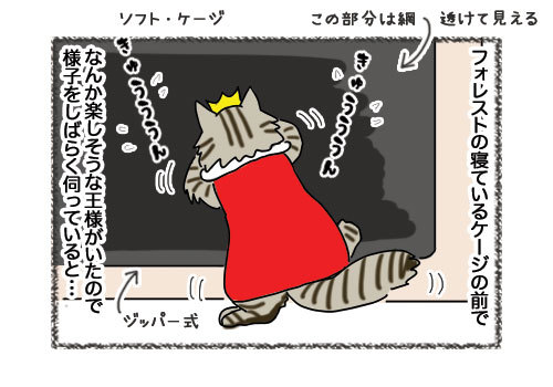 14022019_cat3.jpg